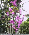 庭の花2.JPG