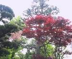 庭の花3.JPG
